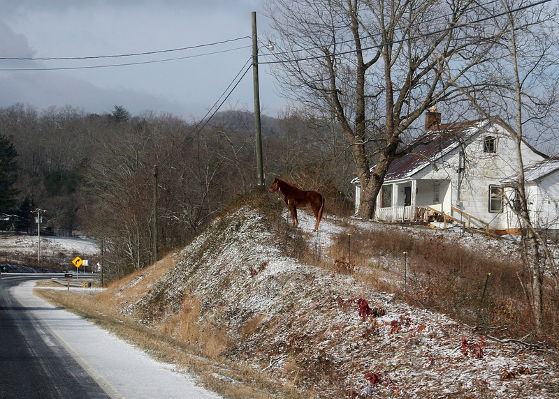 Horse along Highway 76