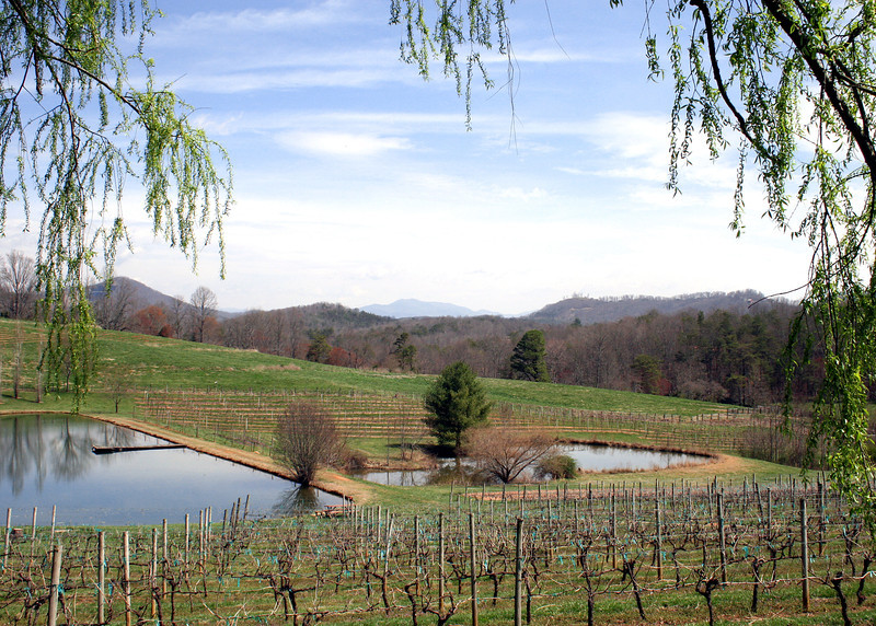 View of the vineyard from the deck