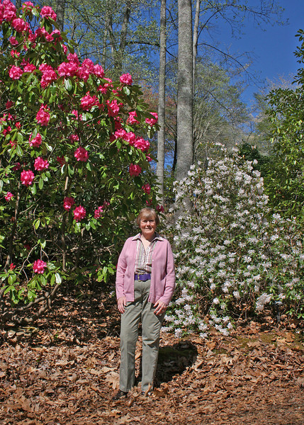 Susan and Rhododendrons at Hamilton Garden in Hiawassee, GA