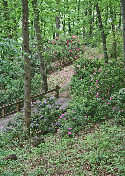 Hamilton Rhododendron Gardens