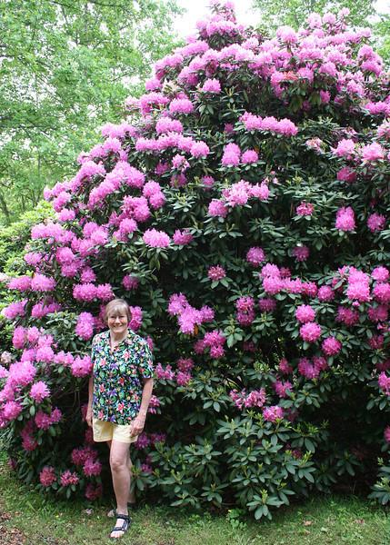 Susan at Hamilton Rhododendron Gardens