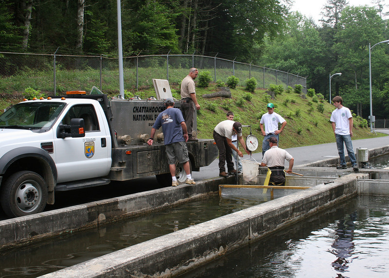 Loading up the fish to plant the stream for the Senior Fishing Derby at Chattahoochee Forest Fish Hatchery