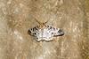 Moth on roof.