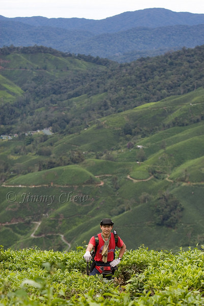 KT in the tea plantation.