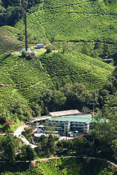 View of BOH tea house, factory and viewing platform from the airstrip.