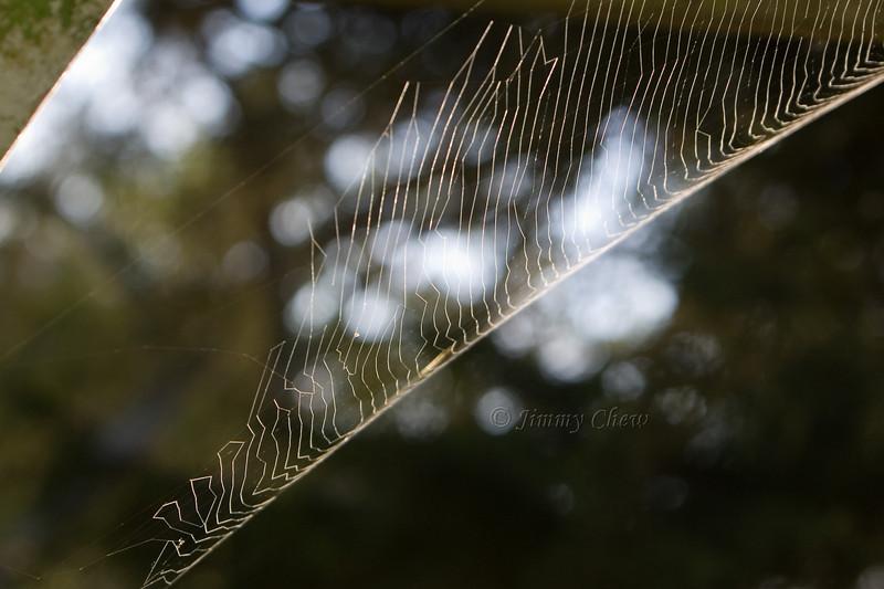 Cobwebs on verandah undisturbed.