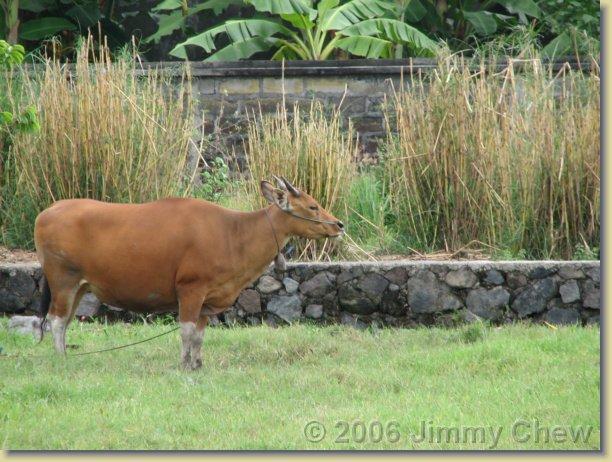 A cow on open field.