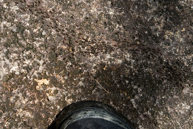 Crossing path - let's not disturb nature. That's my hiking/trekking shoe for scale.