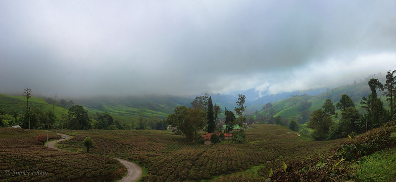 Panoramic view of the tea plantation - along the road to the chalets.