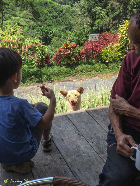 This dog is a local resident at the vicinity of BOH tea house.