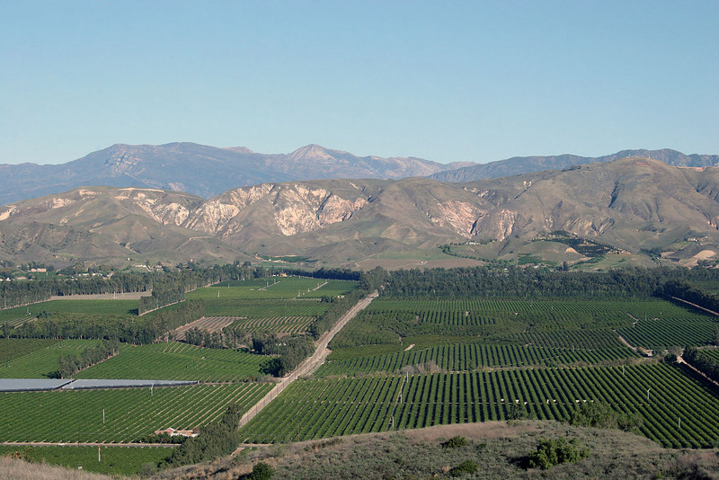 Foothills, orchards and Sierra Mountains