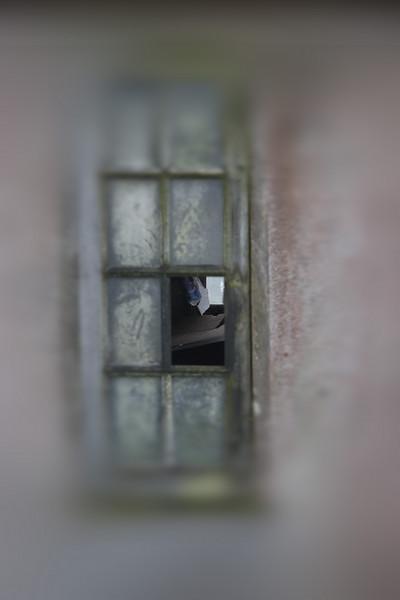A peep thru the window.