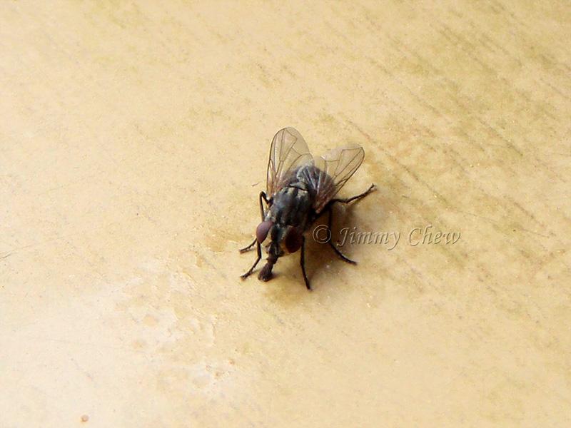 Macro on a fly.