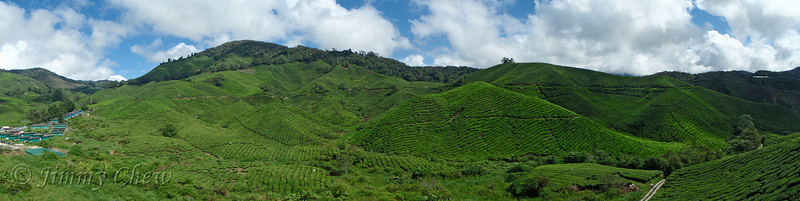 Panoramic view of the Sungai Palas tea plantation - from the cafe platform.