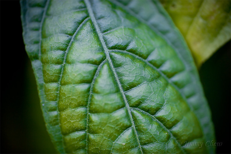 Close up shot of a leaf.