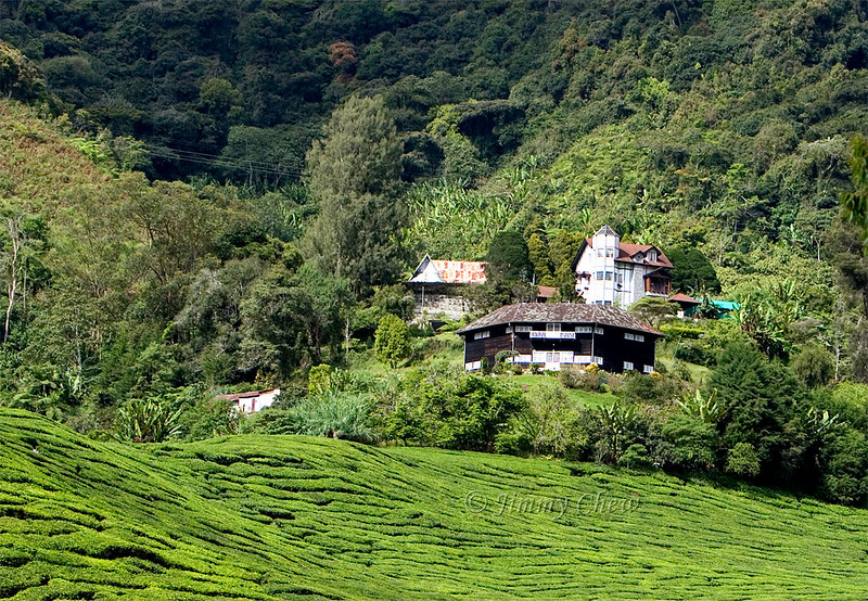 Houses on the Sungai Palas tea plantation.