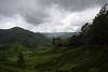 En route to Gunung Brinchang.
