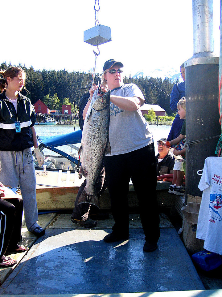 Salmon being weighed