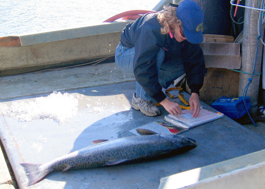Becky Wilson of the Fish and Game used the Salmon Derby to weigh and measure the salmon for the department