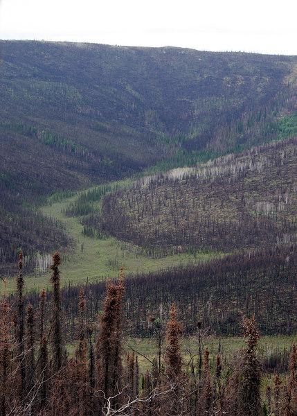 Nome Creek Valley