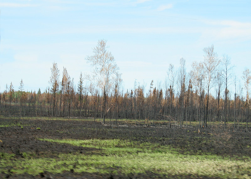 Driving through the Nenana, AK area where the fire is still burning