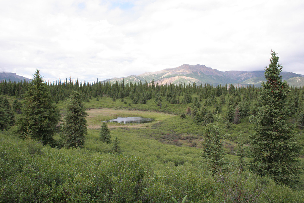 One of the ponds you see in the area.  Moose like these ponds.