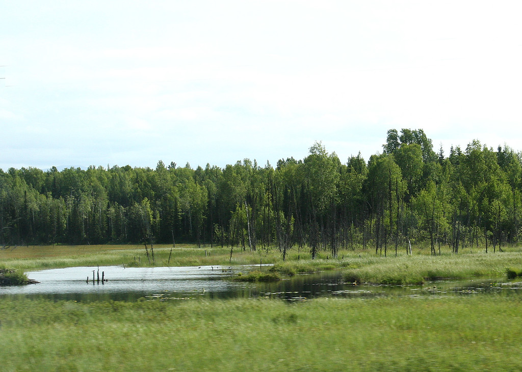 Marshland about 100 miles north of Anchorage
