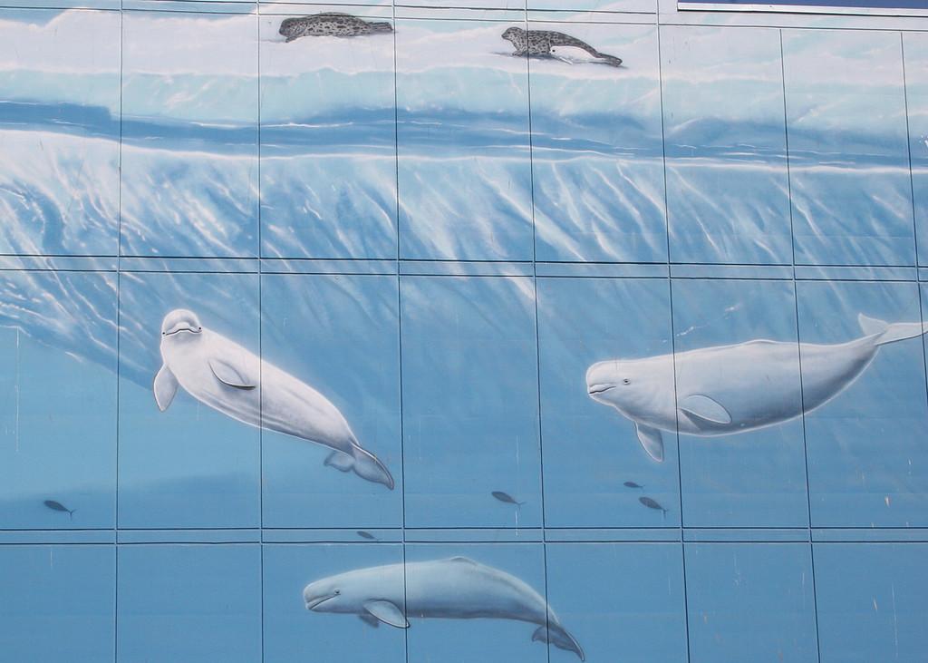 Mural of beluga whales