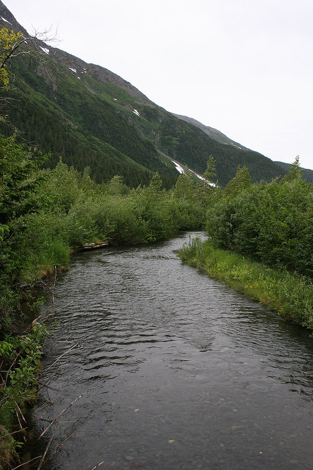Creek at Williwaw Fish Viewing