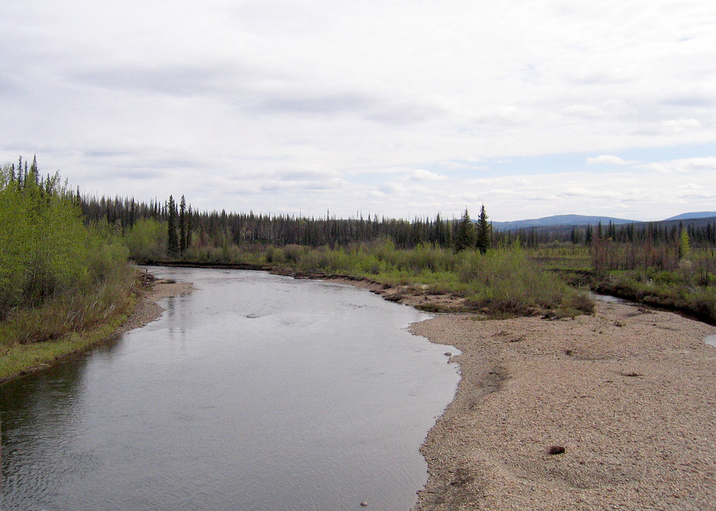 West Fork of Dennison Fork of the Fortymile River about 15 miles from Chicken, AK