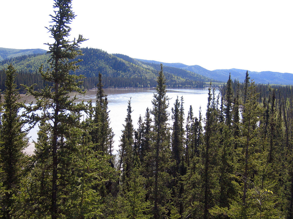 Tanana River about 30 miles north of Tok, AK