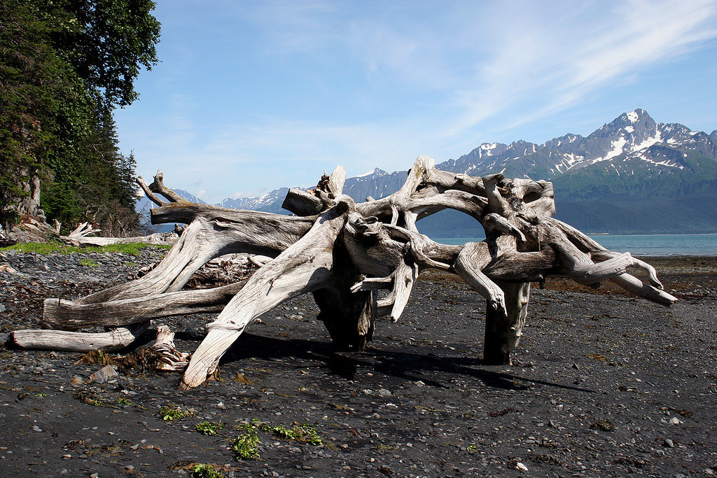 Driftwood along beach at Tonsina Point, Seward, AK