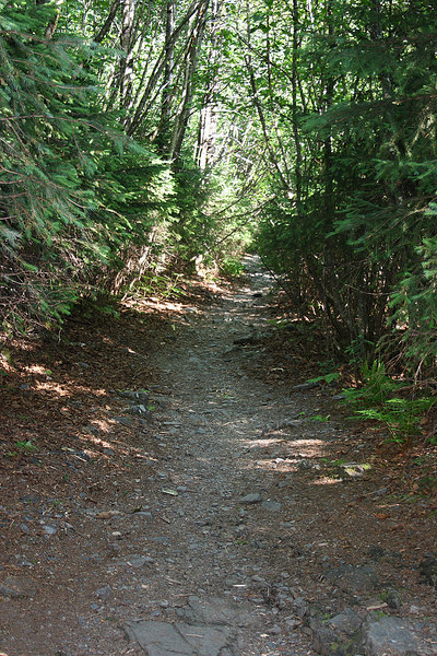 Along the trail into Tonsina Point, Seward, AK