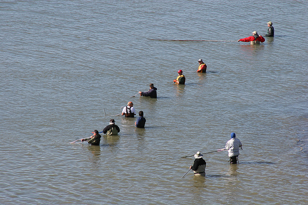 Dip net fishing at mouth of Kenai River.  This is subsistence fishing for locals only.