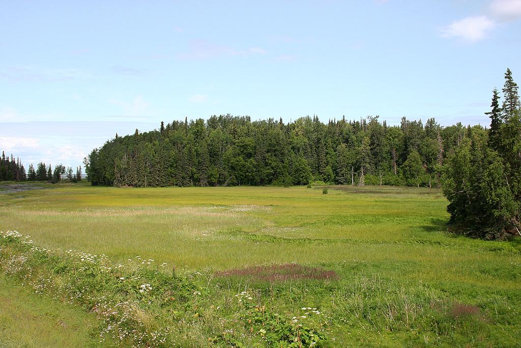 Meadow next to Swanson River in Captain Cook State Recreation Area, Kenai, AK