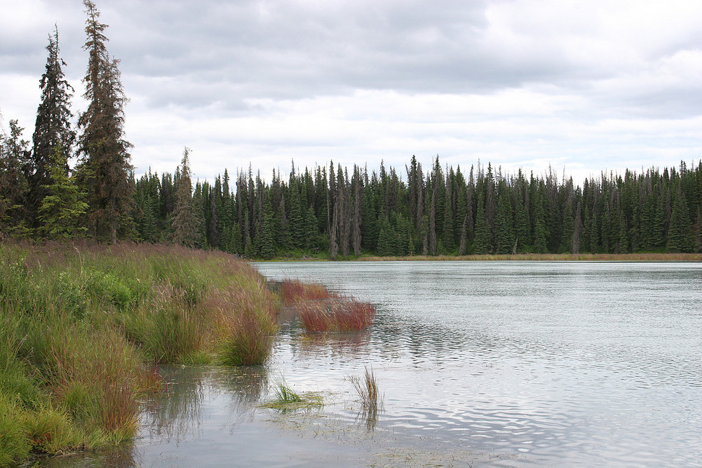 Kasilof River near Tustumena Lake, Kasilof, AK