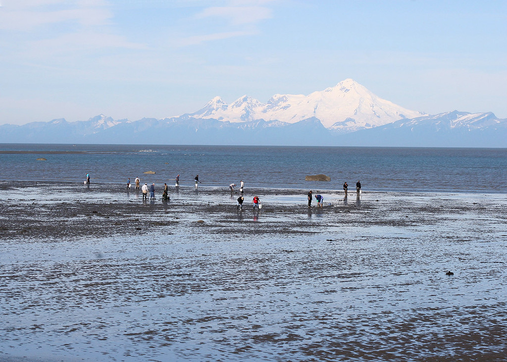 Clammers with Mt Iliamna in background from beach at Ninilchik Village, AK