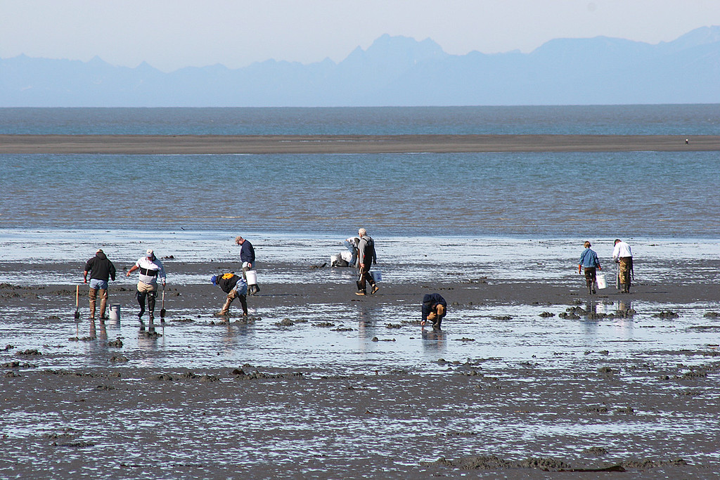 If you look closely, you can see Mike amongst the other clammers at the beach at Ninilchik Village, AK.  Hint:  He has on his brown waders.