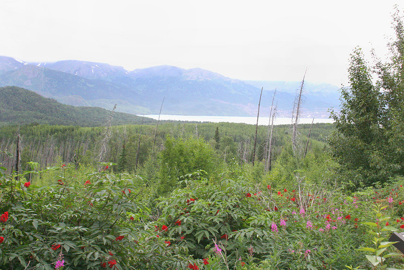Fireweed in burn area with Pothole Lake in background