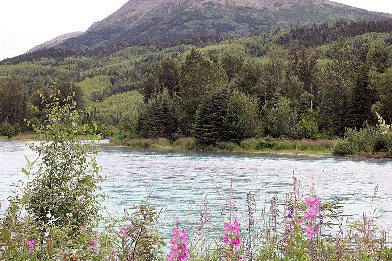 Kenai River at Jim's Landing
