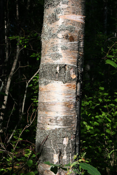 The bark on the trees along the trail was interesting with the many designs