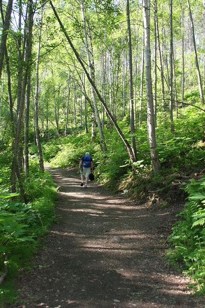 Trail into Thunderbird Falls