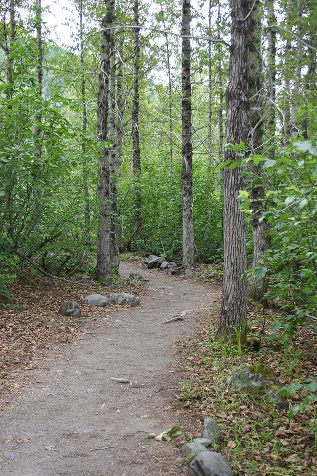 On trail back