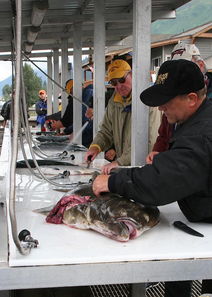 Filleting halibut