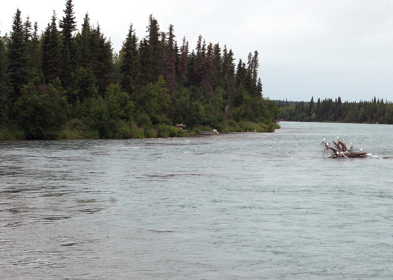 The Kenai River at the state campground along Funny River Road