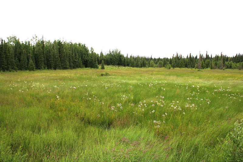 A meadow along Funny River Road
