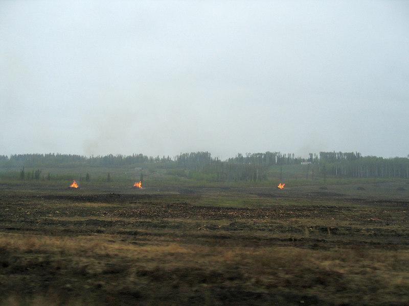 Slash piles burning