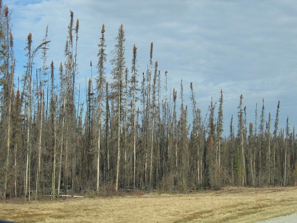 Burn area 62 miles outside of Watson Lake, YT