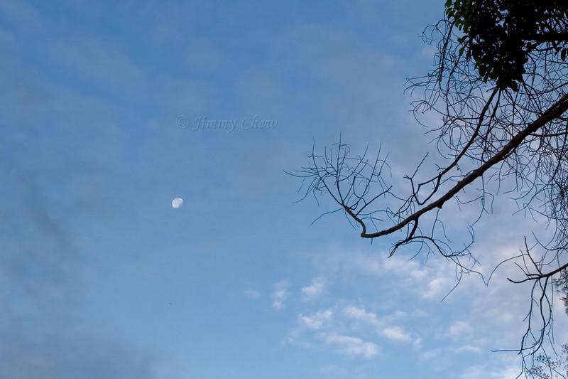 Morning moon.