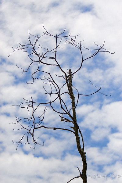A leafless tree near the cape.